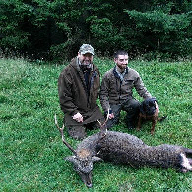 Deer hunting in Scotland - Sika hunting in Ireland