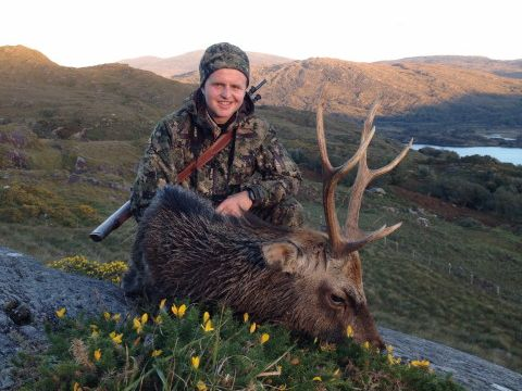Sika Stag - Ireland
