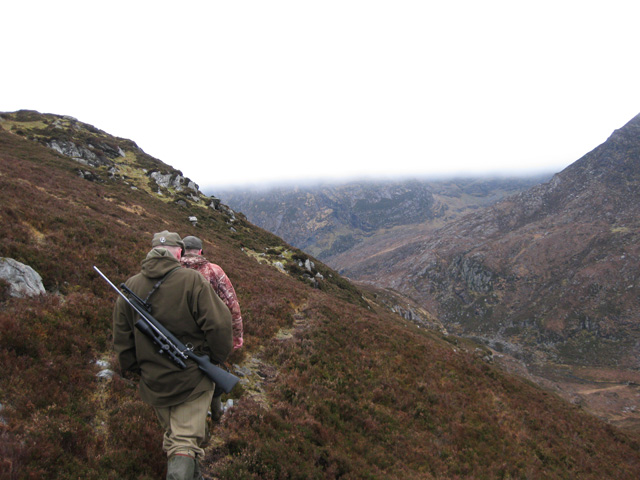 Sika Stag / Wild Goat Hunting - Ireland