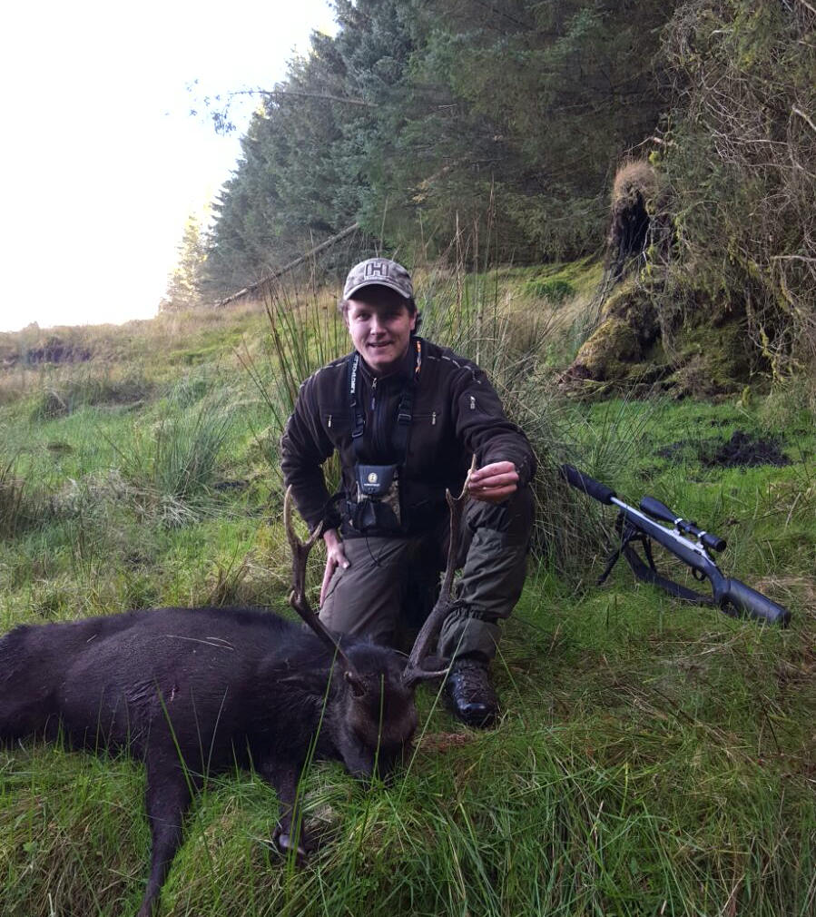 Deer hunting in Scotland - Sika hunting