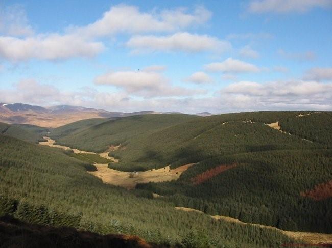 Sika Stag Hunting - Scotland