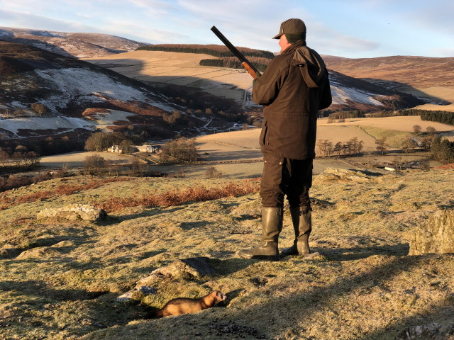 Rabbit Shooting with ferrit